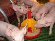 Концентрированый корм для свиней