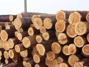 Продам лес кругляк