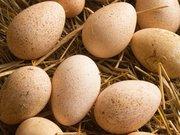 продам інкубаційне яйце